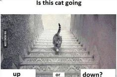 The New 'Dressgate': Is This Cat Going Upstairs or Down?