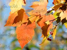 Autunm Leaves Nature Photography Digital Download Wall Art