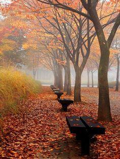#Autumn in the park