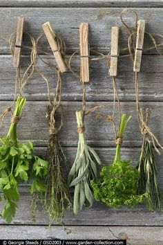 My Shed Plans - drying herbs - Now You Can Build ANY Shed In A Weekend Even If Youve Zero Woodworking Experience! Herb Garden, Vegetable Garden, Deco Nature, Growing Herbs, Plantation, Shed Plans, Dried Flowers, Blooming Flowers, Fall Flowers