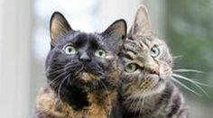 Just the Two of Us - Click to see lots of great cat pictures to brighten your day.