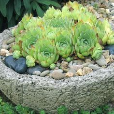 Homegrown Stone Pots | DIY Garden Projects | Vegetable Gardening, Raised Beds, Growing & Planting | DIY