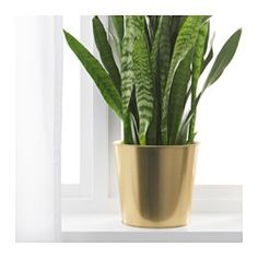 "IKEA - DAIDAI, Plant pot, 7 ½ "","