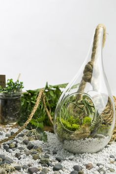 We love the teardrop terrarium! Such an awesome shape you don't normally see for holding plants.  Everything you need to build it comes straight to your door so you can jump right in and start making.