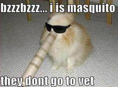 bzzzbzzz... #catoftheday