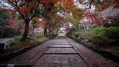 Road of the ancient capital of Kyoto - Emotional some Kyoto road. We love the autumn of Kyoto. It is a place to feel Japan.