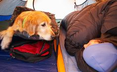 How to Prep Your Dog for Camping