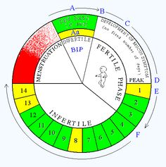 natural family planning method chart: Basal body temperature graphbbt chart for pregnancy 621x570 normal