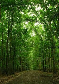 What an amazing forest! tag: Alas Purwo National Park