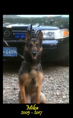 K9 Mika - E.O.W. 26 July 2017 K9 Mika served with the Southbridge Police Department for over 8 years with her partner Officer Rich Reddick. She retired on her 10th birthday in 2015, living her remaining years able to enjoy all that retirement has to offer. Our thoughts are with Officer Reddick and Mika as she makes her way to the Rainbow Bridge. We will never forget your service to your community. Rest easy girl, we have the watch from here. Thank you for your service K9 Mika.
