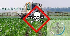 PETYCJA Teraz mamy w ręku dowód: fuzja koncernów Bayer i Monsanto będzie mieć katastrofalne skutki dla rolników, konsumentów i dla środowiska. Wesprzyjmy naukowo dowiedzione wnioski oddolną siłą społecznego ruchu - naszą siłą!