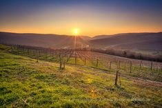 Discover Wine Wednesday - Croatia's Coastal Wine Region | Savored Journeys