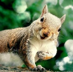 Who, me ? Ate all the nuts?  Naaah, would never do that!