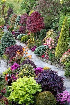 jeux de couleurs sur les plantes dans le #jardin