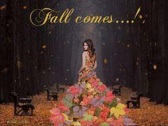 dreamies.de - Blog von 8644basset42