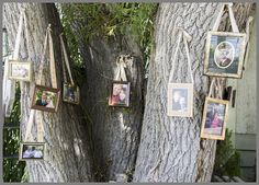 The family tree at our backyard wedding.