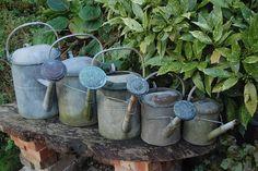 Collection of metal-zinc watering cans. Metal Watering Can, Watering Cans, Potting Sheds, Potting Benches, Water Me, Garden Shop, Edible Garden, Garden Gates, Deco