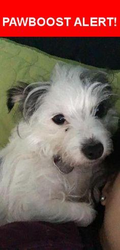 Please spread the word! Buster was last seen in Austin, TX 78744.    Nearest Address: Near Barkdale Ct & Chateau Village Way