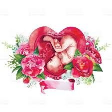 Image result for baby in womb illustration flowers