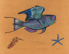 © James Prosek, Blue Parrotfishe, 2013, watercolor, gouache, colored pencil, and graphite on paper, courtesy of the artists and Waqas Wajahat, New York
