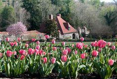 Pink tulips at the Biltmore!