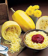 Vegetable Spaghetti Winter Squash Seeds and Plants, Vegetable Gardening at Burpee.com