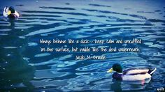 December 18, 2016 Always behave like a duck – keep calm and unruffled on the surface, but paddle like the devil underneath. Jacob M. Braude