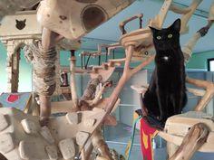 Cats, Gatos, Cat, Kitty, Kitty Cats