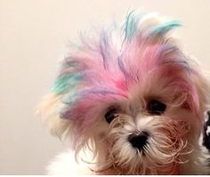 Mitzi with hair chalk from Touch Salon in #Milltown #NJ
