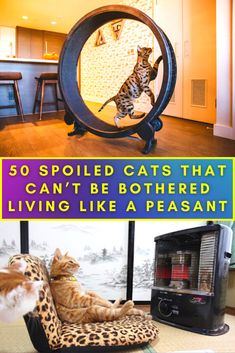 Cats are often described as regal, and clearly many of their owners share this sentiment. The following are examples of cats who are treated as if they are royalty. Or at least very special and sometimes just cute! Here are 50 spoiled cats who probably live better than you do.