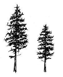 pine tree tattoo - Google Search                                                                                                                                                                                 More