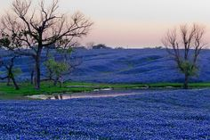 If you missed this, visit bluebonnet trail next spring and see an entire valley of Texas' state flower bloom.