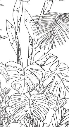 Jungle Tropical Black & White Wallpaper for Ohmywall created by the Caddous & Alvarez artists duo in the spirit of a mural. Their drawings, imagined and traced to four . Jungle Drawing, Nature Drawing, Plant Drawing, Wall Drawing, Art Drawings, Tropical Wallpaper, Nature Wallpaper, Jungle Wallpaper, Mural Art