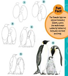 Chill Out: Learn to Draw Polar Animals Beth Bauer