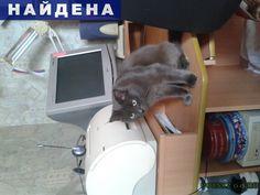 Найдена кошка очень красивая полу британской породы го г.Челябинск http://poiskzoo.ru/board/read31674.html  POISKZOO.RU/31674 Найдена кошка полубританец голубая вакцинировала и стерилизовала примерно три года очень спокойная ходит в лоток умница просто отдам в добрые руки или пусть найдёться старый хозяин такую умницу не могли выкинуть возможно убежала отдам с последующей отслеживанием судьбы.   РЕПОСТ! @POISKZOO2 #POISKZOO.RU #Найдена #кошка #Найдена_кошка #НайденаКошка #Челябинск