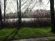 Emmen, Grote Rietplas. Langs de waterkant.
