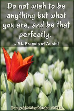Do not wish to be anything but what you are, and be that perfectly.   ~St Francis of Assisi