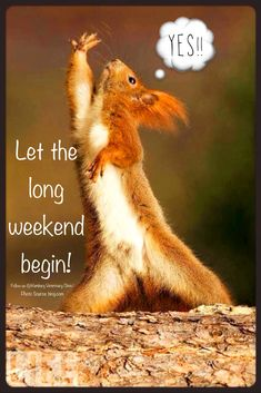Weekend funny | Long weekend | Animal funny | Cute squirrel | Celebrate | Relax | Enjoy weekend | Enjoy life | Go outside | Time spent with family and friends:  YES! Let the long weekend begin! What's on your agenda this Labor Day weekend? Hope it's a memorable one, friends.