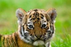 Save Wildlife and Their Habitats from Deforestation ! PLEASE... - Care2 News Network
