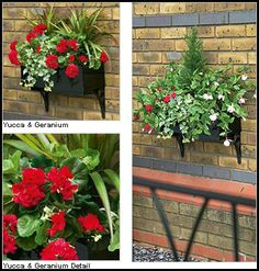 Summer Hanging Baskets - Ultimate Guide to Hanging Baskets