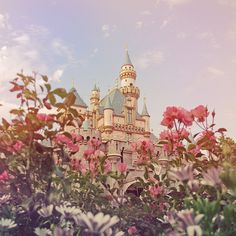 castle- looks like Sleeping Beauty is getting ready to be rescued.