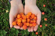 Cloudberries from Scandinavia