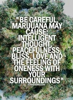 true Best Vaporizer, Buy Weed, Mein Liebling, How To Stay Healthy, Smoking Quotes, Hemp, Cannabis, Drugs, Real Quotes