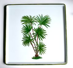 Prato Palmeira