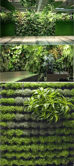 Verde verticale e orizzontale per allestimento stand moda,parete verticale,soffitto,angolo bar e immagine primo piano di una sezione del verde verticale.