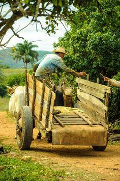 Valle de Vinales, CUBA - JANUARY 19, 2013: Man working  on Cuba