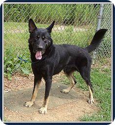 Cobb County Animal Shelter, 1060 Al Bishop Drive Marietta, Georgia 30008, call (770) 499-4136 for more information.