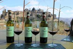 **Montefioralle Winery (Greve in Chianti, Italy): Top Tips Before You Go - TripAdvisor