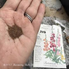 Starting Seeds in the Mini Greenhouse Starting Plants From Seeds, Seed Starting, Gardening For Beginners, Gardening Tips, Sun Plants, Mini Greenhouse, Growing Tomatoes, Head Start, Planting Seeds