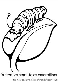 caterpillar coloring page free printable coloring book page ps